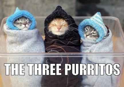 Three Purritos Mobile Casino cat meme